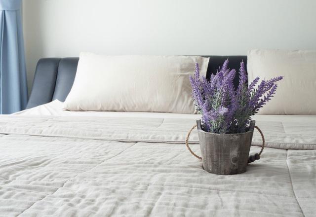 nên trồng cây gì trong phòng ngủ cây oải hương