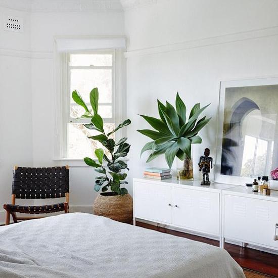 chọn cây xanh cho phòng ngủ