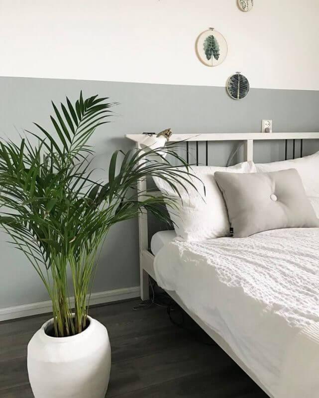 nên trồng cây gì trong phòng ngủ cây cau cảnh
